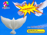 Воздушный шар - голубь,  шар в форме белой птицы