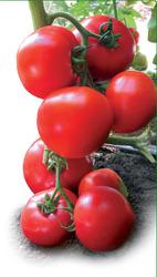 Cемена Китано. Предлагаем купить семена томата  ЯДВИГА F1
