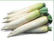 Семена Китано. Предлагаем купить семена редиса дайкон ТИТАН